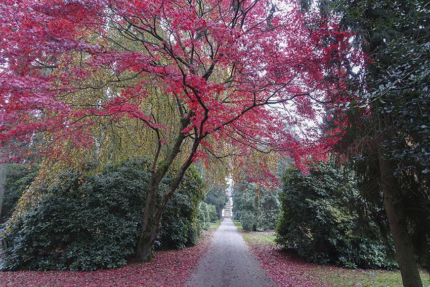 Ohlsdorfer Friedhof roter Ahorn vor Kapelle 7